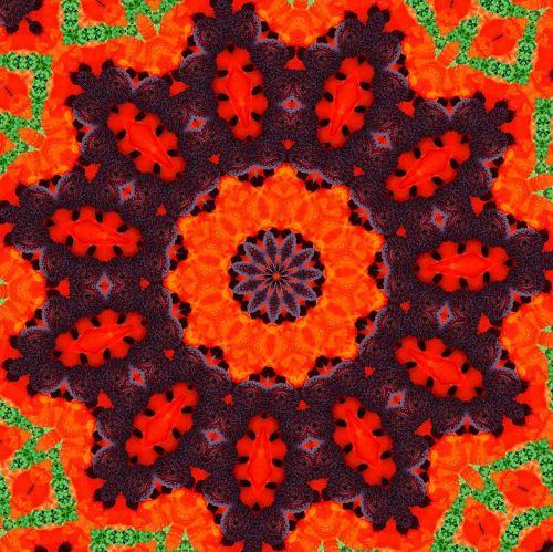 orange fiery poppy