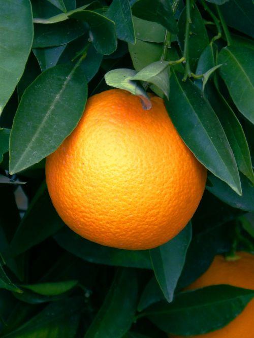 orange naranjo citric