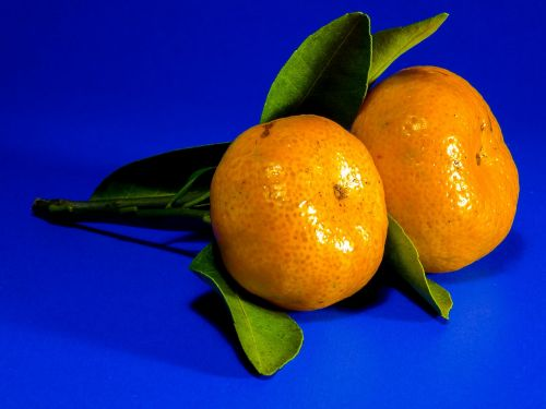 orange mandarin citrus fruit