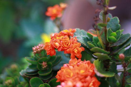 orange flower lovely
