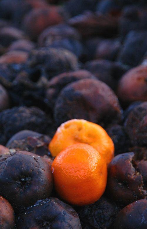 orange rotten fruit