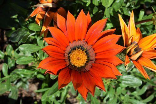 orange flower green