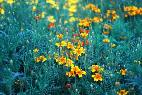 orange yellow flowers