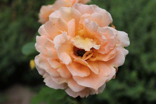 orange flower botanical gardens