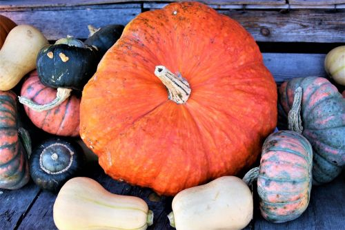 orange ornamental pumpkins vegetables