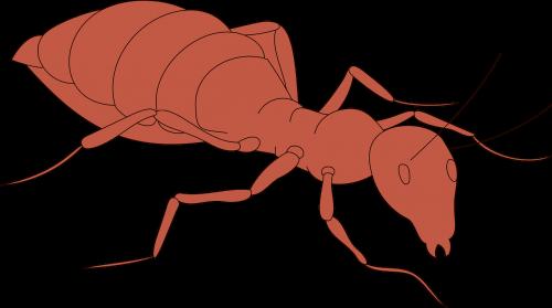 orange ant body