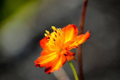 orange blossom flower flower stamp