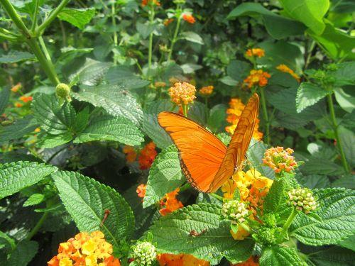 orange butterfly flower bug