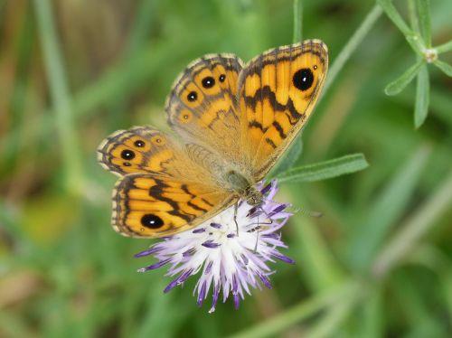 orange butterfly detail wild flower