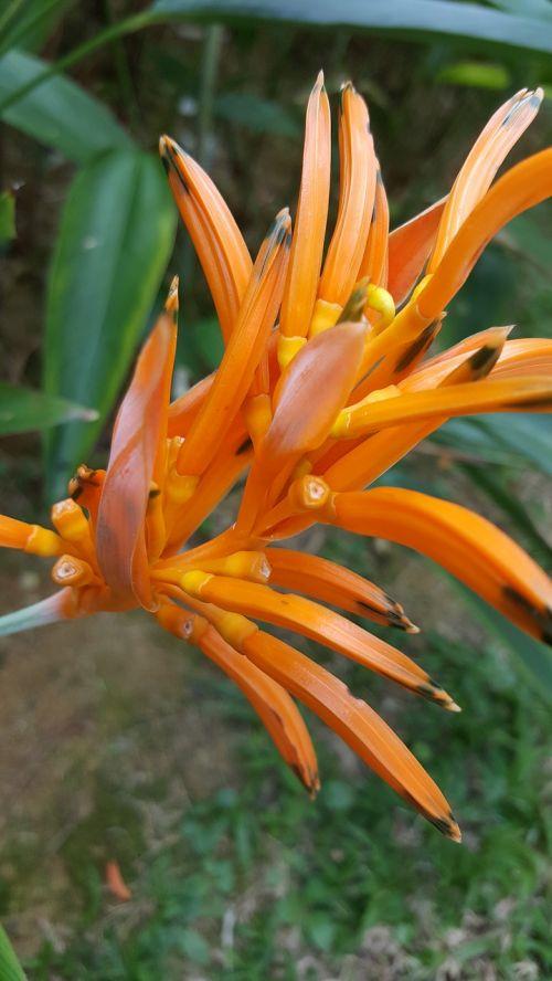 orange flower flower orange