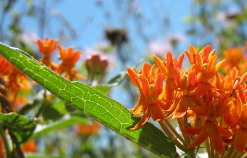 orange flower leaf orange