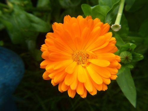orange flower nature flower