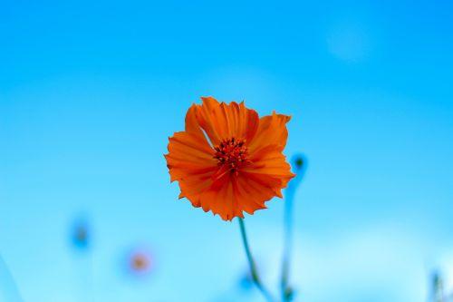 orange flower nature bright