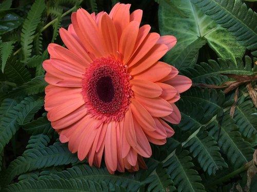 orange flower  petals orange  orange