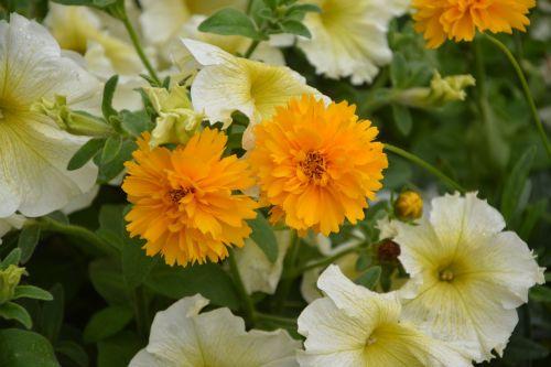 orange flowers jardiniere garden