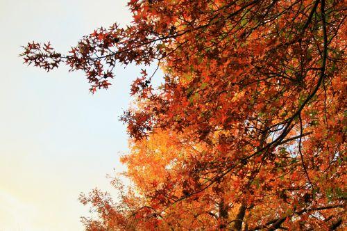 Orange Leaves In Late Sunlight