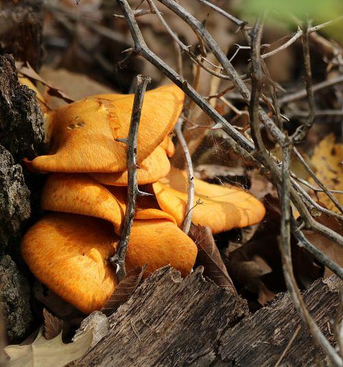 Orange Mushrooms And Thorns