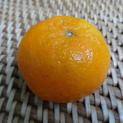 Orange On Textured Background