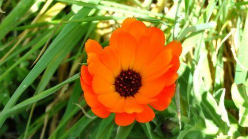 Orange Spring Flora