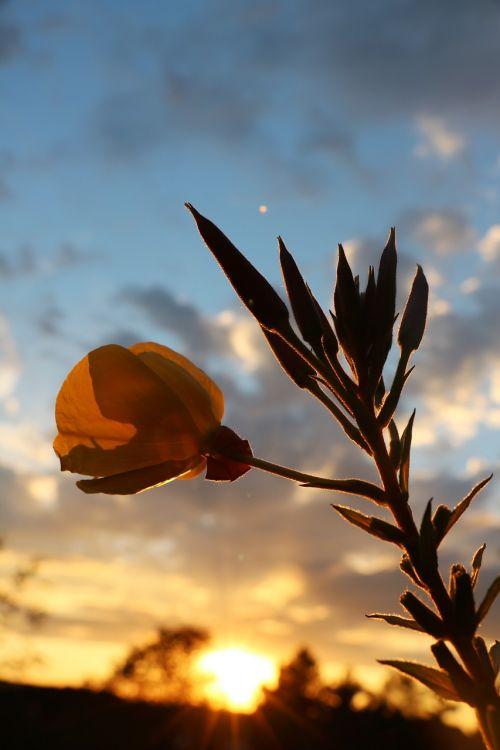 orange yellow yellow flowers petals