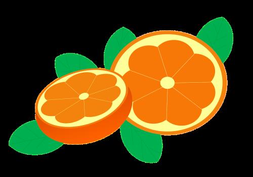 oranges orange bay citrus sinensis
