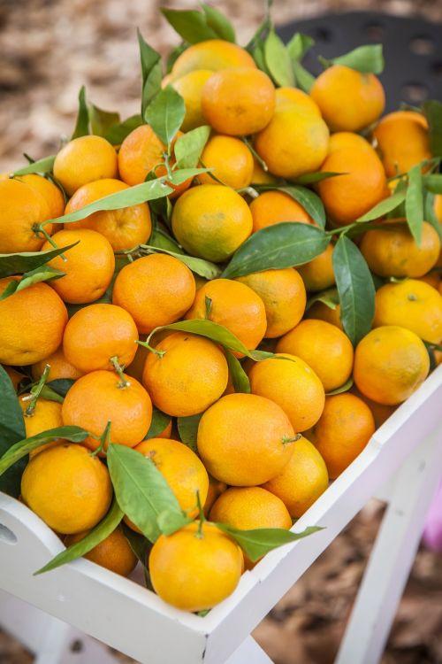 oranges orange fresh juice