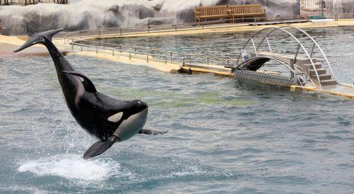 orc acrobatics marineland