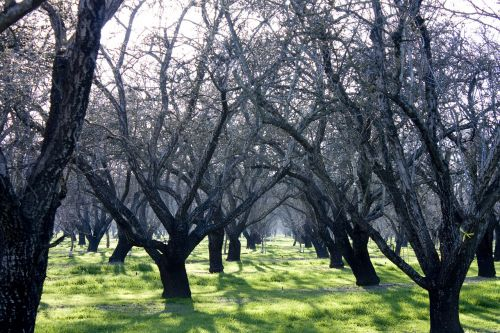 orchard agriculture trees