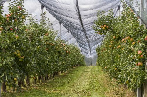 orchard hail net protection