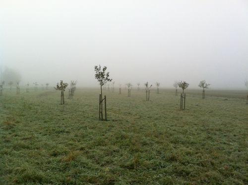 orchard november fog