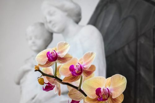 orchid maria jesus