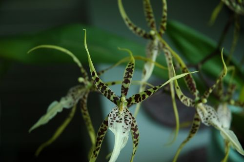 orchid plant blossom