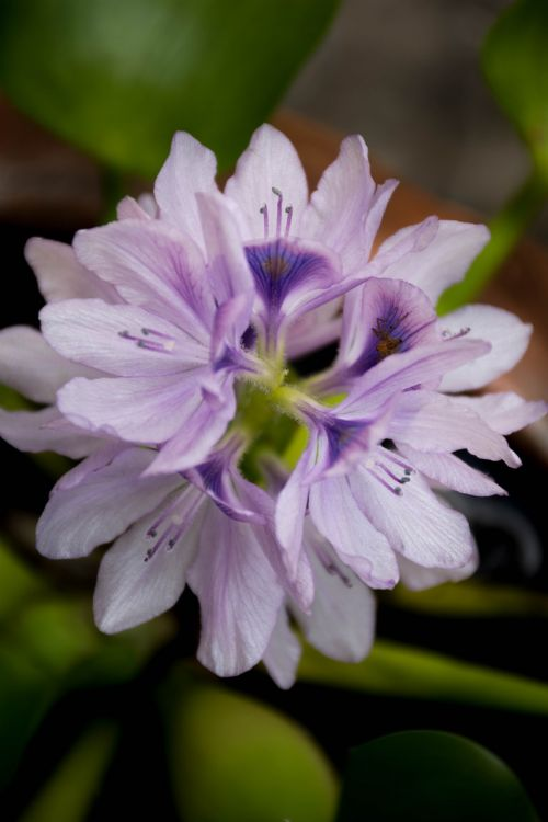 orchid purple nature