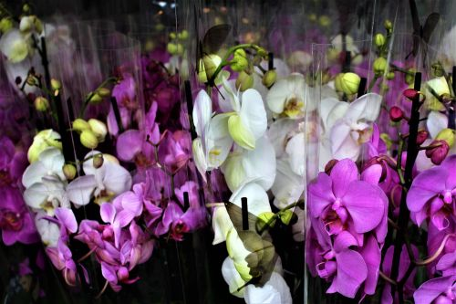 orchid flowers flower