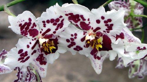 orchidėjų, gėlė, Tropical, egzotiškas, pobūdį, gėlės, augmenija