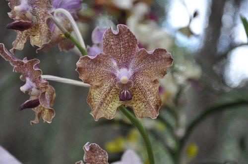 orchid  garden  flower