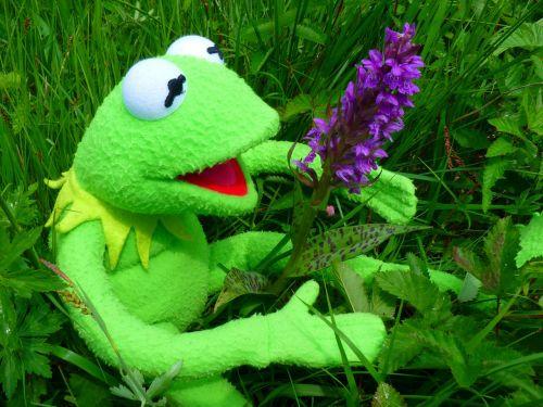 orchid getuepfeltes frog