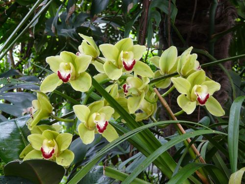 orchid flower bloom
