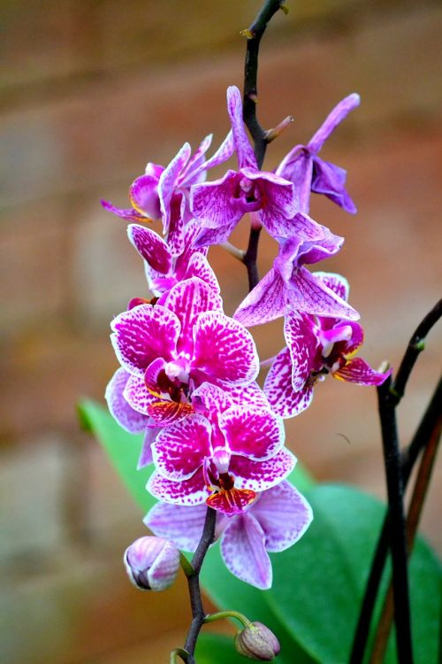 orchid flower blossom
