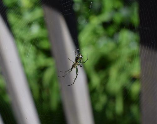 orchid spider spider arachnid