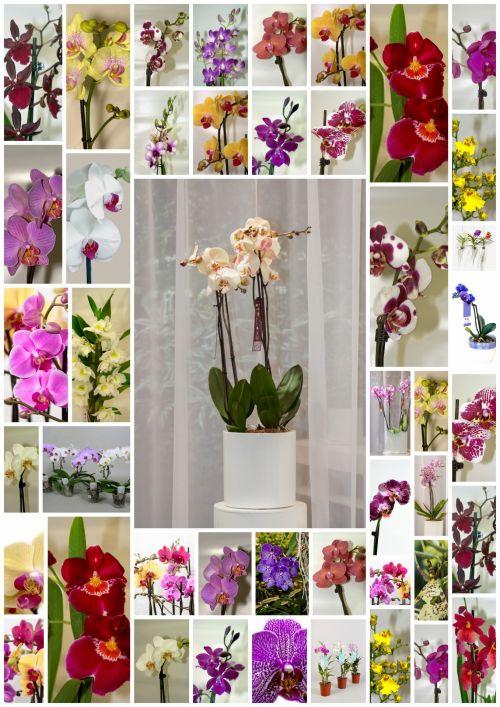 Orchids Diversity