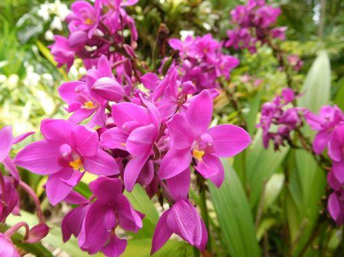 orchids flowers plants