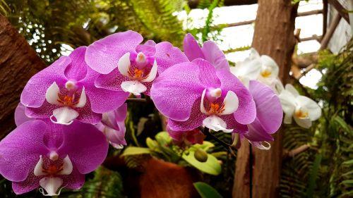 orchids flower plant