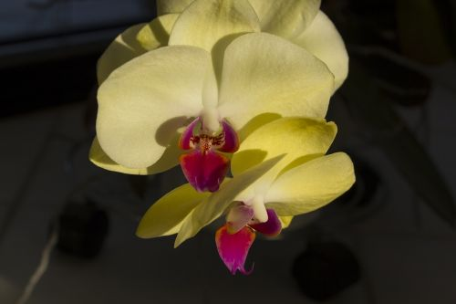 orchids flower n