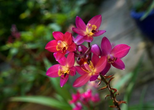 orchids purple orchid pink bunches of orchids