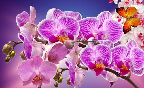 orchids flowers garden
