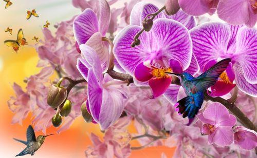 orchids purple orchids beija flor