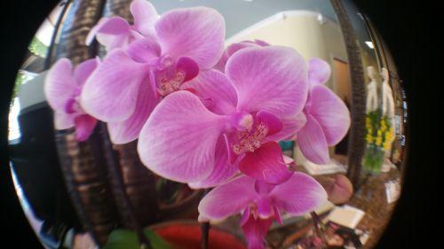 Orchids Closeup