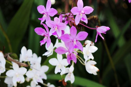 Orchids In My Backyard 3