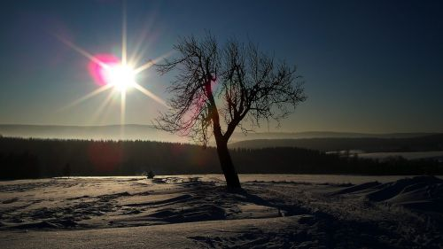 ore mountains winter tree